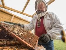 Harderwijkse bijen opnieuw mikpunt van vandalisme, wijkplatform is 'piswoest'
