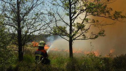 IN KAART. Nu al alarmfase oranje voor brandgevaar in Antwerpse natuurgebieden