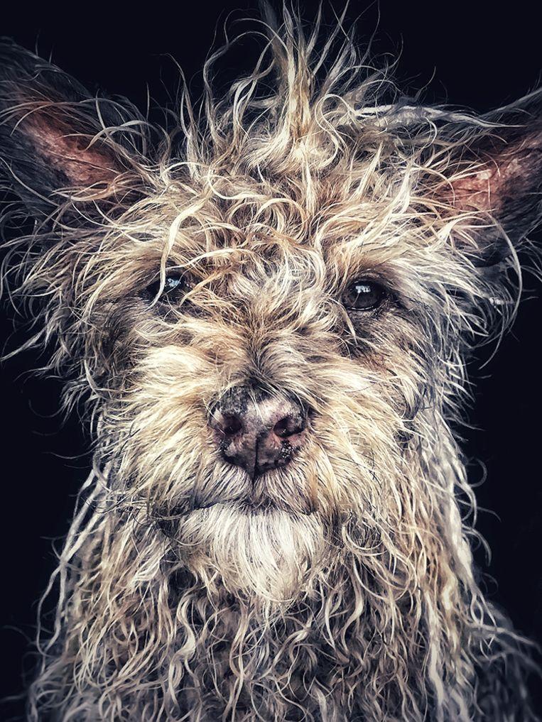 """Django"" Old man baby dog - Robin Robertis (VS)"