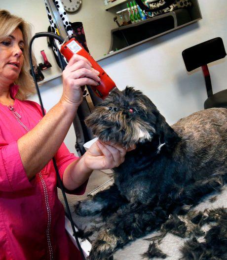 Weg met het coronakapsel: honden mogen weer naar de kapper (als het écht nodig is)