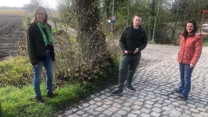 """Torhout brengt bomenbestand in kaart: """"Willen zien waar we er nog kunnen planten"""""""
