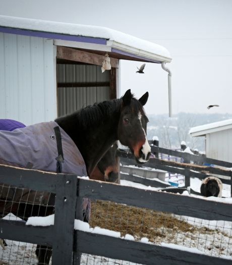 Tientallen dode en zieke paarden op boerderij VS, boer opgepakt wegens dierenmishandeling