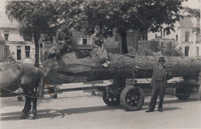 Zo begon het familiebedrijf H. Huyskamp's Fijnhouthandel in Zwolle. Het bedrijf hoort bij de oudste familiebedrijven in ons land. Familiebedrijven zijn belangrijk voor de economie.