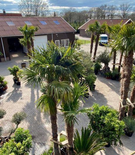 Palmbomen op transport: Tropic Trees verhuist naar Hengelo