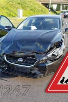 Overstekende eenden veroorzaken twee aanrijdingen in Rijswijk