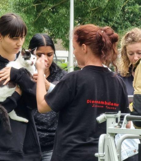 Tweede poging slaagt: Hengelose kat Dobby met succes uit boom gered