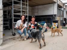 Honden in november welkom in voormalige stoeterij in Bemmel: 'De dieren hebben bij ons de ruimte'