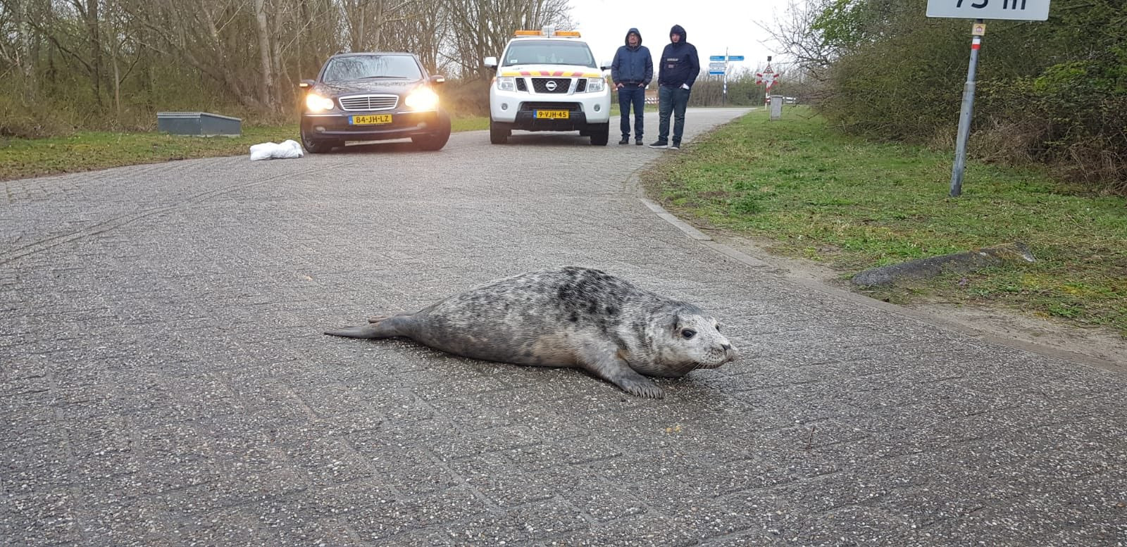 De zeehond werd op de parkeerplaats aangetroffen.