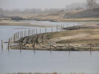 Beheerwerken in Zwin om broedeilanden te beschermen