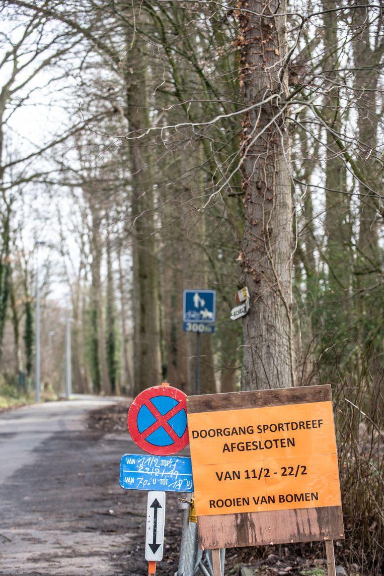 De aankondigingsborden staan er al: maandag wordt met het kappen van de bomen gestart.
