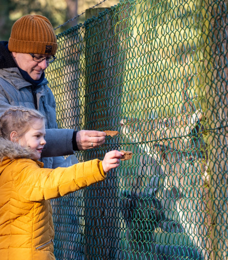 Op deze drie plannen kunnen inwoners stemmen voor vernieuwd hertenkamp in Epe
