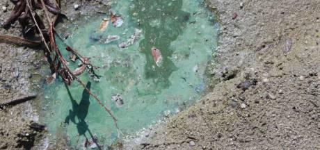 Provincie waarschuwt voor blauwalg in Hambroekplas bij Borculo