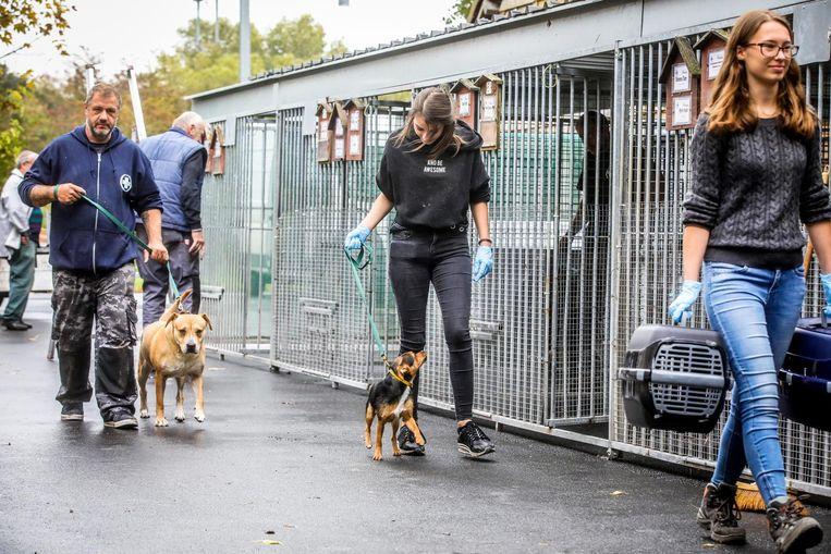 De medewerkers trekken met de honden naar de tijdelijke verblijfplaats.