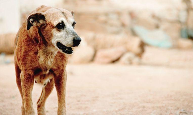 Wauw: hond speurt vrouw op die haar leven redde