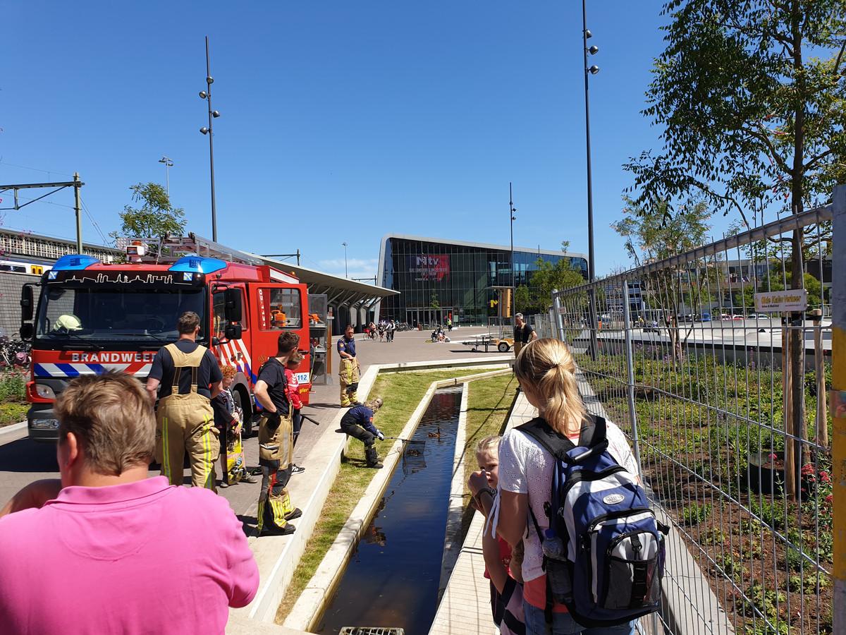 De brandweer kwam donderdag voor de vijfde keer in actie om eendjes te redden, dit keer in het vernieuwde beekje naast het skatepark.