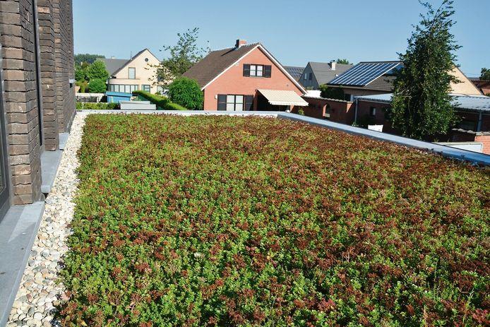 Voor de aanleg van een groendak kunnen inwoners van Schoten een milieupremie krijgen