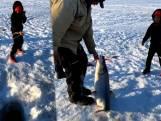 6-jarige jongen vangt vis die even groot is als hijzelf