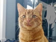 Opnieuw kat beschoten met luchtdrukwapen, huisdier overleeft het niet: 'Dit moet stoppen!'