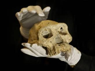1,8 miljoen jaar oude mensenschedel gevonden