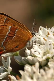 1200 struiken voor vlinders in Zeewolde