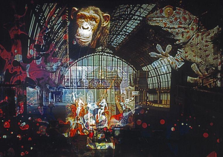 Lichtshow in Paradiso, circa 1970 Beeld Adri Hazevoet