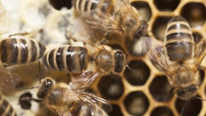 Vijf vragen over insecticide fipronil