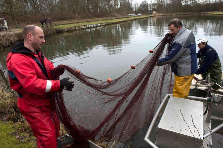 Met grote netten worden de vissen geteld in de putvijvers.