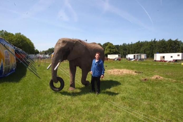 Circusolifant Buba.