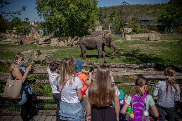 Ook de dierentuinen mogen weer open.