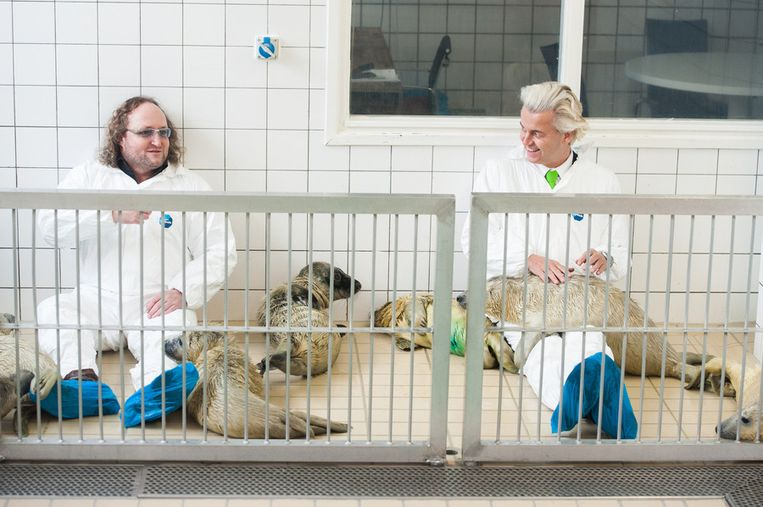 Geert Wilders (R) en Dion Graus (L) knuffelen pups in de zeehondencreche van Lenie 't Hart. Beeld anp