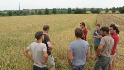 """Brouwerij 3 Fonteinen en 15 lokale boeren slaan handen in elkaar: """"Zo schuiven we samen op naar een meer agro-ecologische teelt"""""""