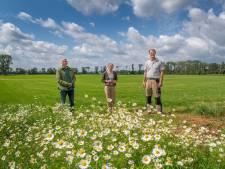 Verzet tegen laatste kansrijke gebied voor windmolens in Brummen: 'Het kán hier gewoon niet'