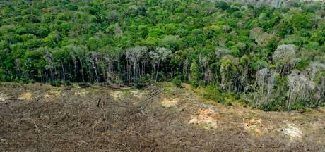 Les députés brésiliens approuvent une loi qui pourrait favoriser la déforestation