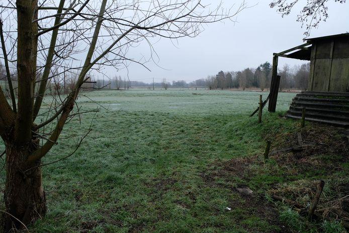 Enkele weilanden in de Lierse Polder zullen worden omgezet in volwaardig natuurgebied.