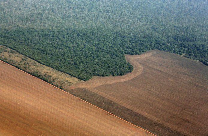 Het Amazonegebied wordt bedreigd door de snel toenemende ontbossing.