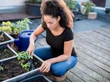 Op een dakterras tuinier je met potten en bakken: deze planten zijn geschikt