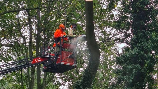 Brandweer verwijdert gevaarlijk overhellende boom in park van Mesen