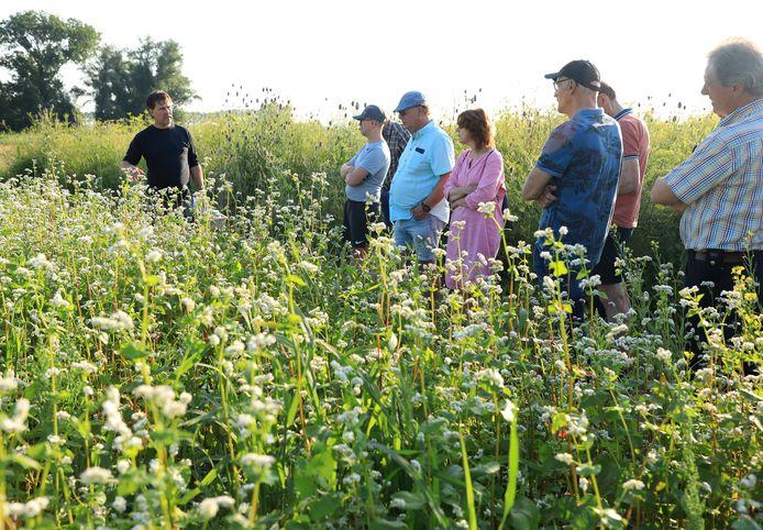 Harm van Hoeve (links) van Agrarische Natuurvereniging Groene Oogst vertelt op het proefperceel in Terhole over alles wat er groeit en bloeit, zoals mosterdzaad.