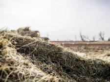 Bijvoeren grote grazers Oostvaardersplassen drie weken verlengd