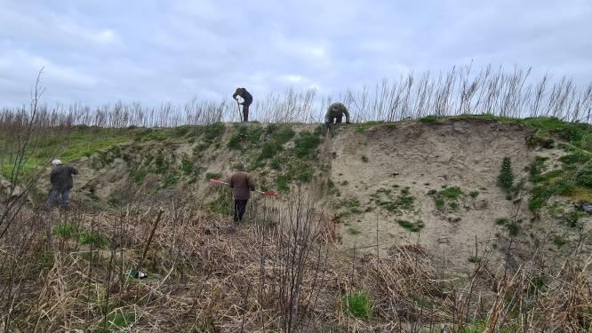 Vrijwilligers helpen oeverzwaluwen een handje in Groot Broek