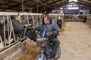 Dirk van de Streek in een van de stallen bij zijn oudste koe (13 jaar).