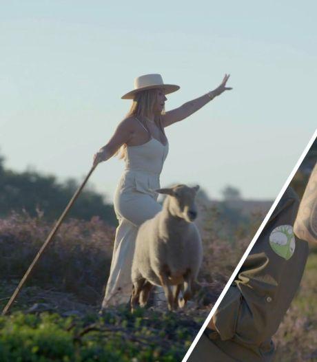 SBS6 zet schapendrijfshow door ondanks horrorcijfers