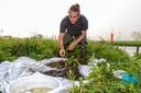 Onderwaterbioloog Bram Koese doet onderzoek naar de rivierkreeft.