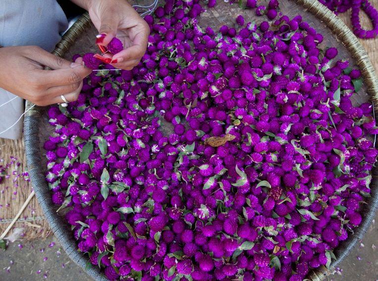 Een vrouw maakt versieringen van Makhmali-bloemen voor het festival in het dorp Gundu. Beeld null