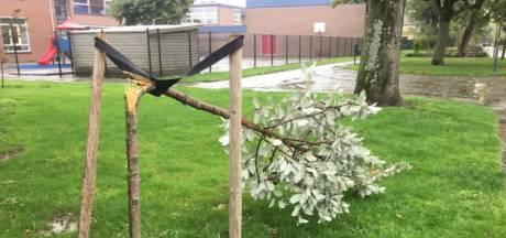 Jonge bomen doelbewust vernield door clubje vandalen in Zuid-Beijerland