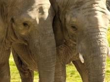 Les éléphantes de Lyon accueillies par les Grimaldi