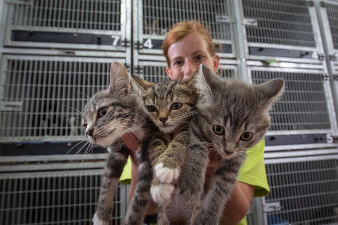 Vrijwilliger Miranda de Groot met enkele kittens in het dierenasiel Edo Hammers in Kampen.