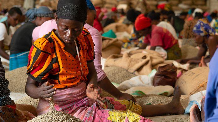 Vrouwen spelen in Burundi een belangrijke rol in de koffieteelt.