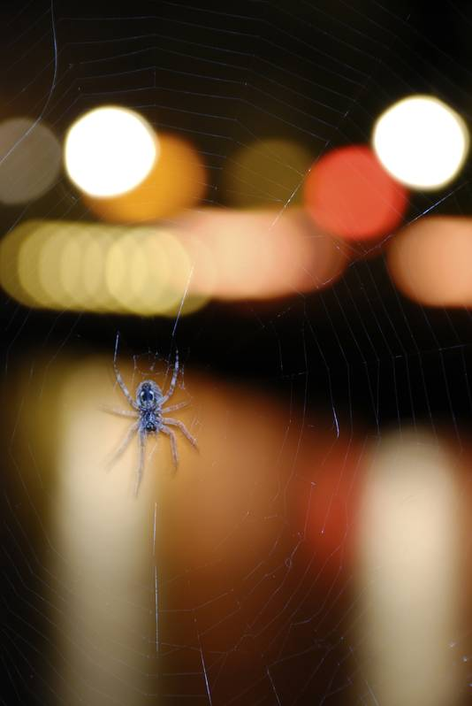 De focus op spinnen zit ingebakken.