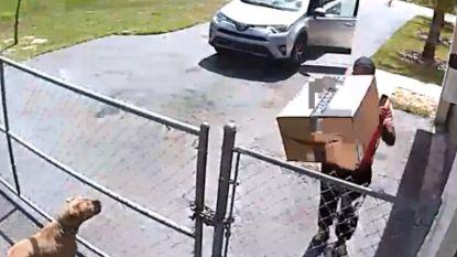 Amazon ontslaat koerier die pakket op puppy laat vallen